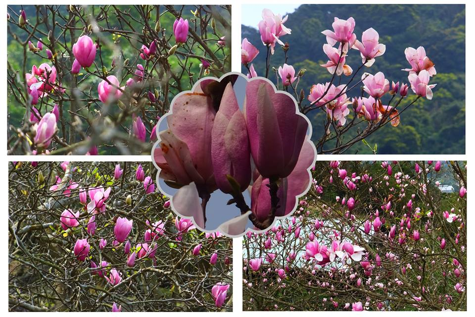 17021484_1934984480070330_305033425009100543_n.jpg - 春夏之花