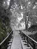 太平山的雪白世界:20180113_114724.jpg