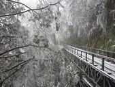 太平山的雪白世界:20180113_114859.jpg