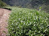 屬於阿里山56km的茶...:DSCN3013.JPG