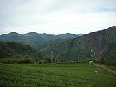 屬於阿里山56km的茶...:DSCN3001.JPG