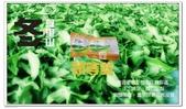 屬於阿里山56km的茶...:IMG_4639拷貝.jpg