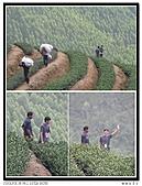 99年天福茶作旅:日進茶廠體驗18.jpg