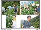 99年天福茶作旅:日進茶廠體驗22.jpg