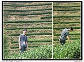 99年天福茶作旅:日進茶廠體驗23.jpg