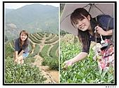 99年天福茶作旅:日進茶廠體驗29.jpg