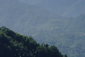 屬於阿里山56km的茶...:_G203947.jpg