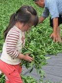 飲山郁:黃小沺│小小製茶師