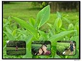 99年天福茶作旅:茶博物院2.jpg