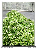 99冬茶香:nEO_IMG_DSCN9908-1.jpg