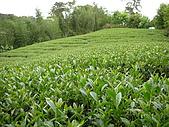 屬於阿里山56km的茶...:DSCN2994.JPG