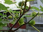 益世小花園:DSC03012.JPG
