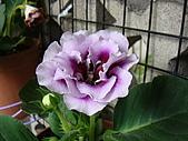 益世小花園:DSC03168.JPG