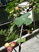 益世小花園:DSC03223.JPG