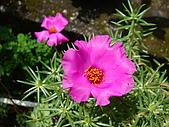 益世小花園:太陽花