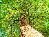 James的花草天空:前路的發展  樹陰下的仰望