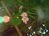James的花草天空:小花花 小果果
