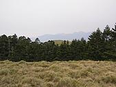 合歡北峰、西峰:P3310184