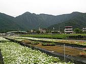 5.阿滿姨庄腳菜(澀水社區)、台一種苗場:P6101714