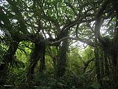 會走路的樹~巒山部落:P3220267