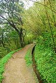 娟絲瀑布~竹篙山:DSC_0250.JPG