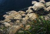 南子吝、石梯坑山、南雅奇岩:DSC_6436.JPG