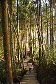 杉林溪景點&鹿谷鄉內湖國小:DSC_2506.JPG