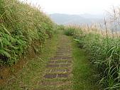桃源谷步道-大溪線、草嶺線:PB050039