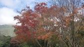天母古道-七星公園:CIMG3612.JPG