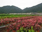 5.阿滿姨庄腳菜(澀水社區)、台一種苗場:P6101702