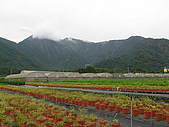 5.阿滿姨庄腳菜(澀水社區)、台一種苗場:P6101705