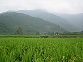關山環鎮自行車道:PA070526