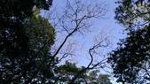 獅仔頭山:IMAG0480.jpg
