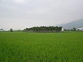 關山環鎮自行車道:PA070516