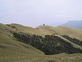合歡北峰、西峰:P3310269