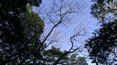 獅仔頭山:IMAG0481.jpg