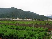 5.阿滿姨庄腳菜(澀水社區)、台一種苗場:P6101709