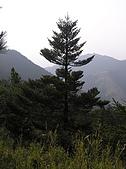 合歡北峰、西峰:P3310107