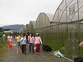 5.阿滿姨庄腳菜(澀水社區)、台一種苗場:P6101704
