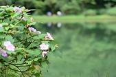 夢湖:DSC_4955.JPG