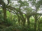 會走路的樹~巒山部落:P3220271