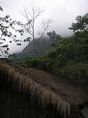會走路的樹~巒山部落:P3220285