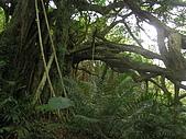 會走路的樹~巒山部落:P3220272