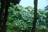 桐花公園~火焰山:DSC_6661.JPG