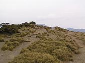 合歡北峰、西峰:P3310277