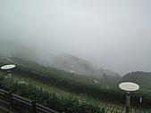 1.碧湖山觀光茶園@梅山:P6091155