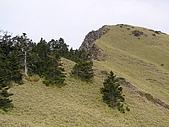 合歡北峰、西峰:P3310262