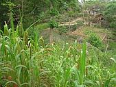 會走路的樹~巒山部落:P3220307
