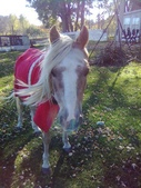pets/animals (家畜/動物):馬
