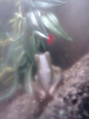 pets/animals (家畜/動物):樹蛙